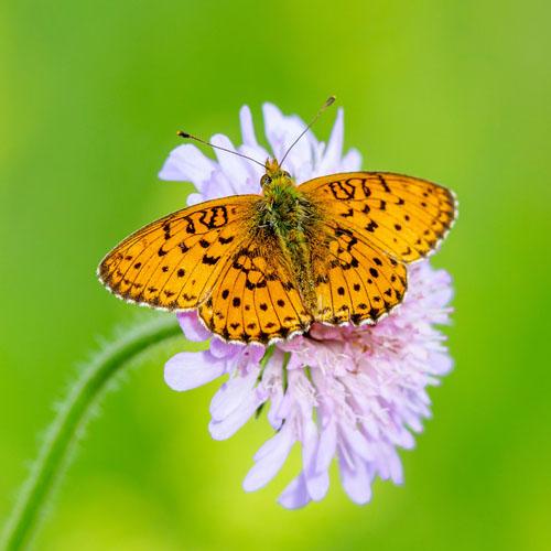 Schmetterling Gruppe
